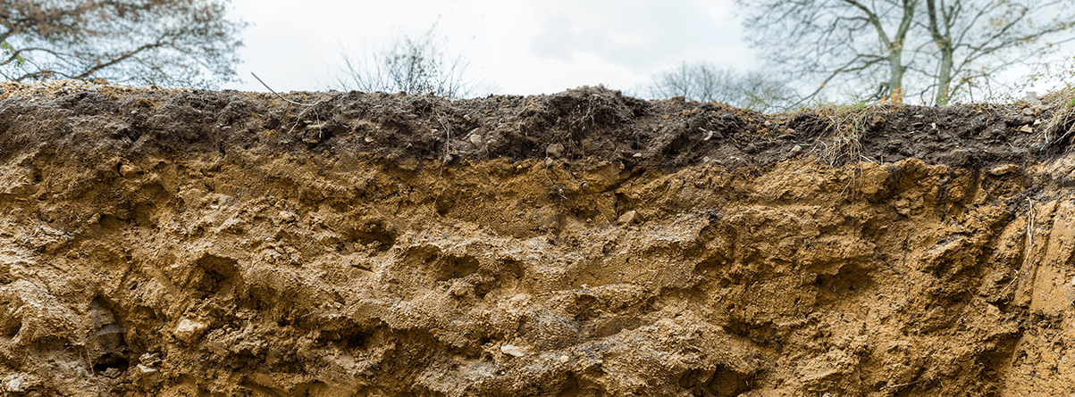 bank of clayey soil